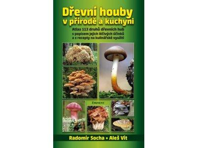 Dřevní houby v přírodě a kuchyni - léčivé účinky a recepty na kulinářské využití