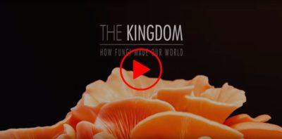 Jak houby stvořily náš svět